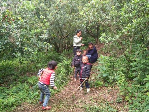 宣威双河乡:杨梅陆续成熟上市 摘杨