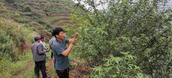 宣威双河乡:合作社带动产业发展 花