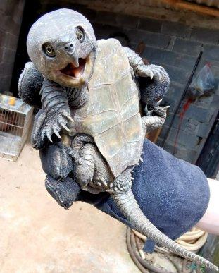 宣威森林警察救助一只小乌龟 竟是国