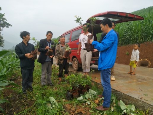 宣威双河乡:4550棵杨梅苗扎根云瑞村