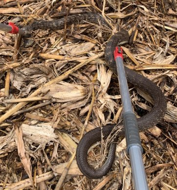 1.8米大蛇溜进民宅 宣威森警出手解忧