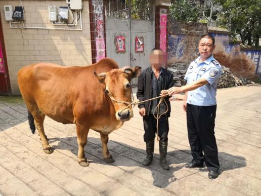 抓获偷牛贼,宣威80岁老汉心爱的耕牛