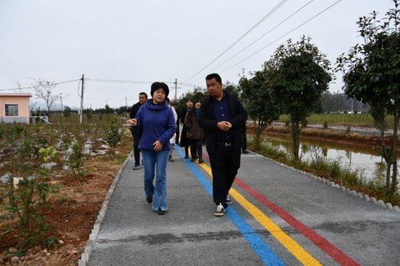 宣威市政协到板桥街道调研现代农业