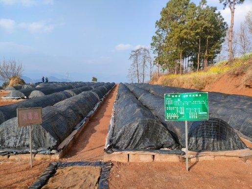 宣威双河乡:烤烟生产育苗工作已全