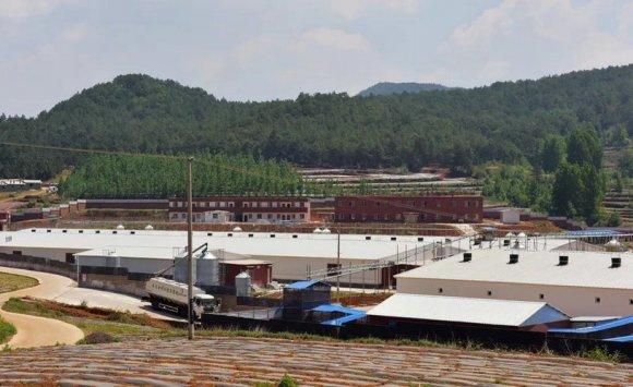 宣威市多措并举助推生猪产业健康发