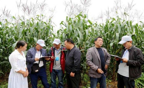 宝山镇:送技术到田间地头 减少面源