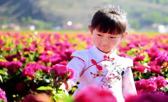宝山镇:870亩玫瑰竞相绽放 美了乡村