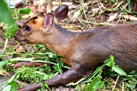 宣威市最后一批退养野生动物被放生