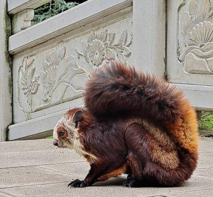 宣威市杨柳镇放生国家保护动物——