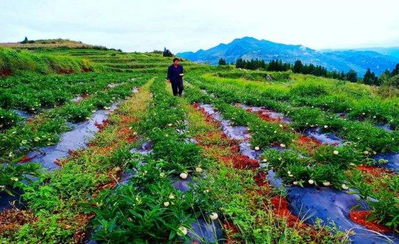 宝山镇:农旅融合谱新篇 乡村旅游天
