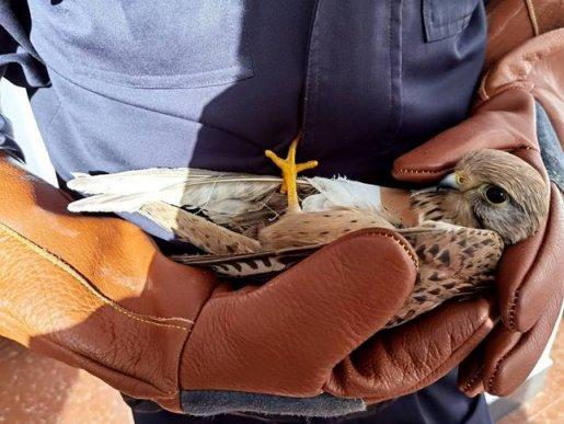 宣威森警救助两只国家二级保护动物隼和猫头鹰