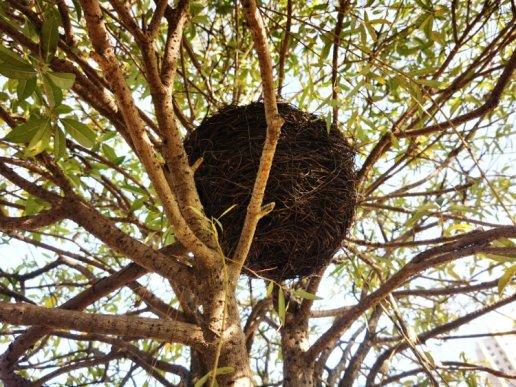 宣威地景公园树上的鸟窝