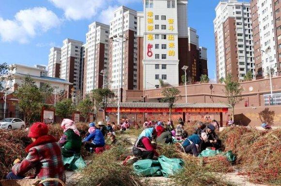 宣威市复兴佳园:扯椒工作找上门 搬