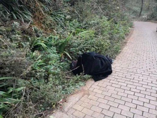 宣威一老人喝多了,酣睡在路边