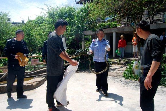 宣威田坝镇:两蛇扰民 民警及时解围