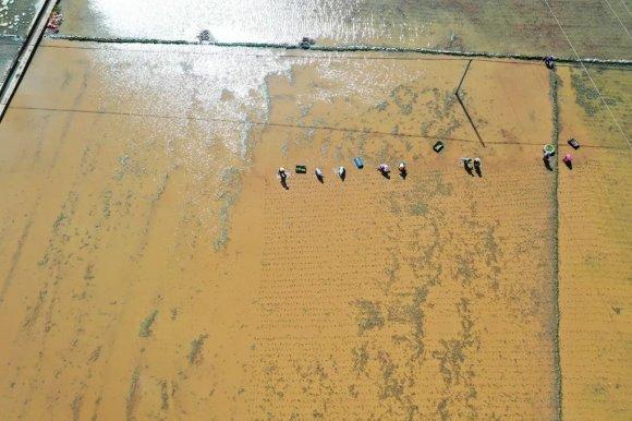 宣威:牢把粮食生产安全关 今年完成