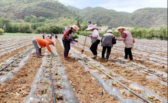 西泽:产业兴农民富 乡村振兴不停步