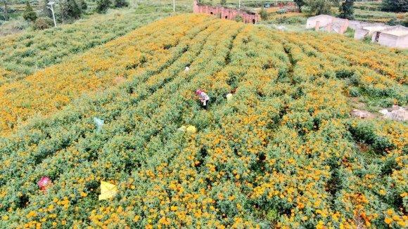 宣威东山:打造万亩田园综合体 农旅