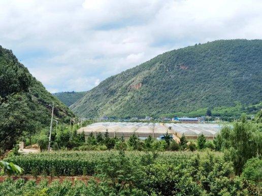 """宣威西泽乡:农业产业""""遍地开花"""""""