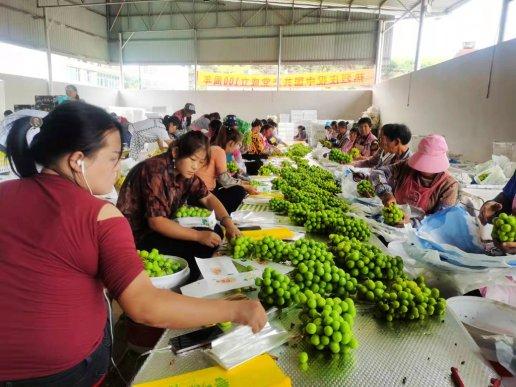 """宣威:打造""""绿色食品牌"""" 助推乡村"""